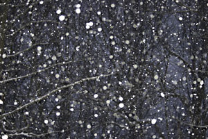 Snow falling in our back yard at night